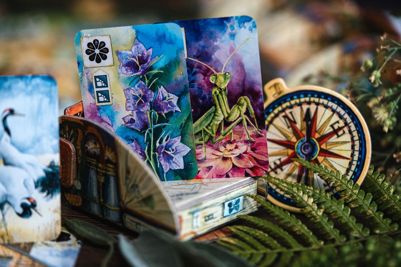 Meadow Asmodée Rebel boardgame jeu de société